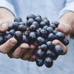 10 Manfaat Buah Anggur Hitam Untuk Kesehatan dan Kecantikan
