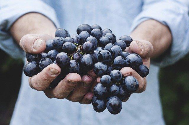 10 Manfaat Buag Anggur Hitam Untuk Kesehatan Dan Kecantikan