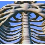 Chiropractor Mengabaikan Subluksasi Tulang Rusuk: Rehabilitasi buat Korban Stroke